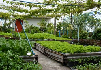 10 Brilliant Rooft Top Gardening Ideas  You Should Try