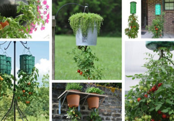 "Growing tomatoes as you didn't know – ""upside down"". With these instructions you can grow them even on the balcony"