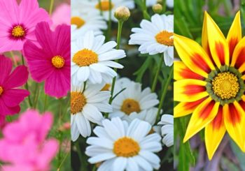 The best flowering plants for the cutest garden